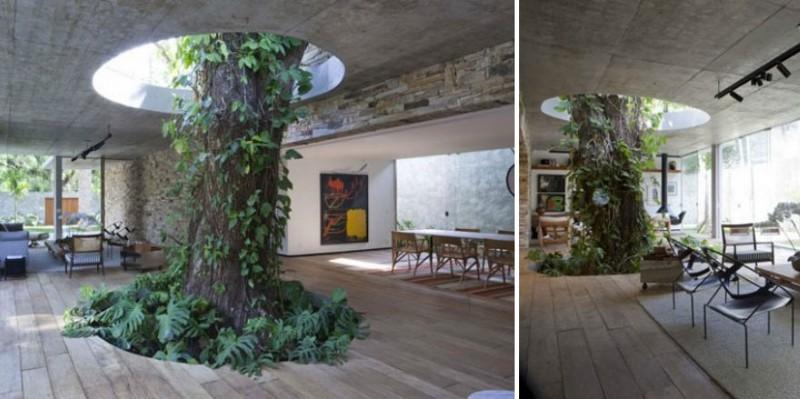 Tree Inside A Livingroom-1